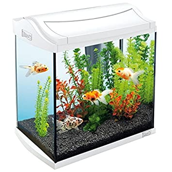 Tetra acuario aquaart 30 L, color blanco: Amazon.es: Productos para mascotas