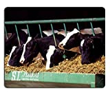 Luxlady Mousepad Cows Cattle Dairy Holstein Farm Natural Rubber Material Image 526771
