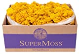 SuperMoss (25151) Reindeer Moss Preserved, Mango, 3lbs