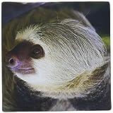 3dRose LLC 8 x 8 x 0.25 Costa Rica Hoffman's Two-Toed Sloth Wildlife Kymri Wilt Mouse Pad (mp_87241_1)