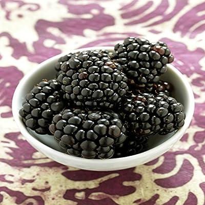 Blackberry Rubus Kiowa delicious grows large fruit LIVE PLANT