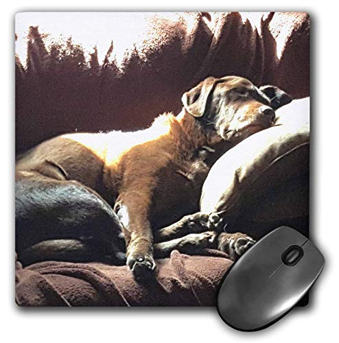 3dRose TDSwhite - Miscellaneous Photography - Lazy Dog Days Sunny Nap Artistic Chocolate Lab Labrador Retreiver - Mousepad (mp_300646_1)