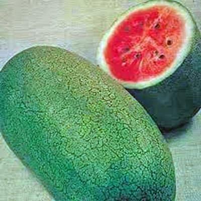 Watermelon, Charleston Grey, Heirloom, Organic 100 Seeds, Large & Super Sweet