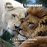 Lions and Lioness 8.5 X 8.5 Calendar September 2019 -December 2020: Monthly Calendar with U.S./UK/ Canadian/Christian/Jewish/Muslim Holidays-Lion Animals Nature by Lynne Book Press