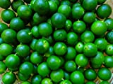 calamansi calamondin Lime Seeds 15 organically Grown!