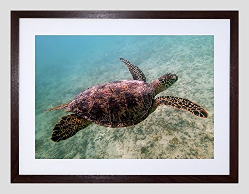ANIMAL REPTILE RED BACK SEA TURTLE Framed Wall Art Wall Picture Frames Wall Decor Pictures for Living Room Bedroom Office 30x40 cm