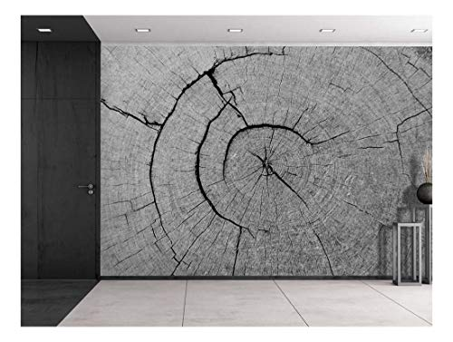 The Inner Works of a Tree Wall Mural