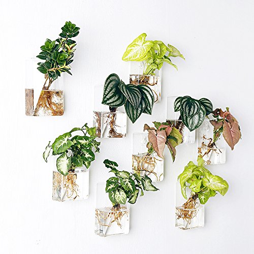 Mkono 2 Pack Wall Hanging Plant Terrarium Glass Planter, Rectangle by Mkono