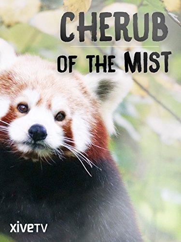 cherub-of-the-mist-the-secret-life-of-the-red-panda