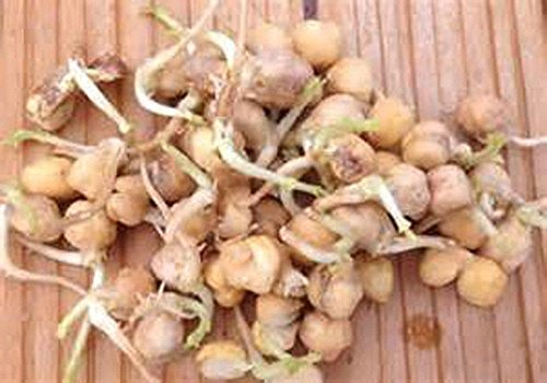 Garbanzo Bean Seed, Microgreen, Sprouting, 4 Pounds, Organic Seed, NON GMO - Cou by Unknown (Image #1)