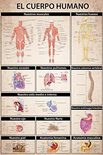 1art1® El Cuerpo Humano - Anatomía, Muscolos Huesos Órganos Póster ...