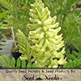 "600 Seeds, Canadian Milk Vetch ""Rattle Weed"" (Astragalus canadensis) Packaged by Seed Needs"