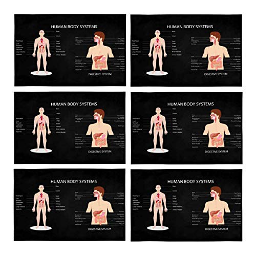 InterestPrint Funny Complete Chart of Different Human Body Organ System Polyester Fabric Placemat Plate Mat Holder Set of 6, Washable Heat Insulation Resistant Table Mats Protector 12