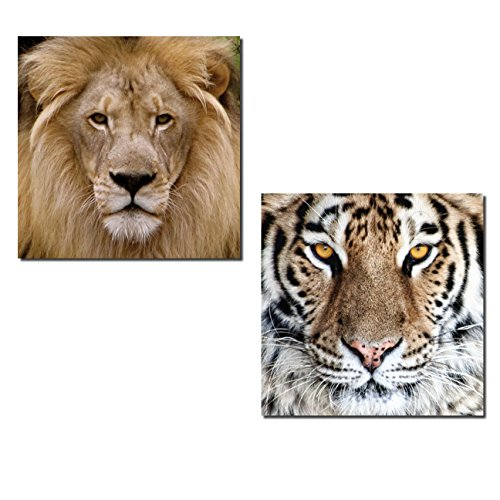 Gango Home Decor Popular Close-up of African Safari Lion and Tiger; Two 12x12in Poster Prints