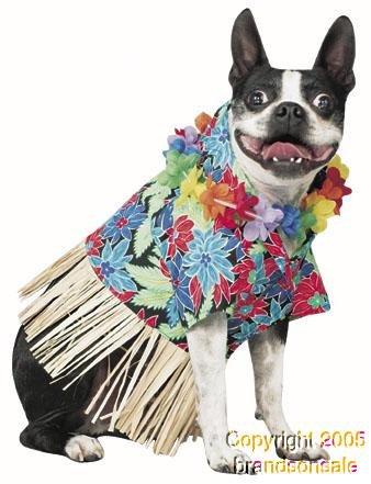 Pony Express Pet Tiki Hawaiian Dog Costume for Small -