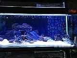 T Tocas(tm) LED Aquarium Fish Tank Light Lighting Underwater Tanks Lamp Bar (Blue/White, 11-inches)