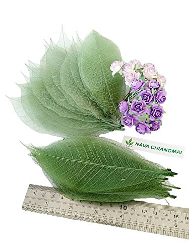 NAVA CHIANGMAI 100 Green Skeleton Leaves Rubber Tree Natural Scrapbook Craft CARD Wedding