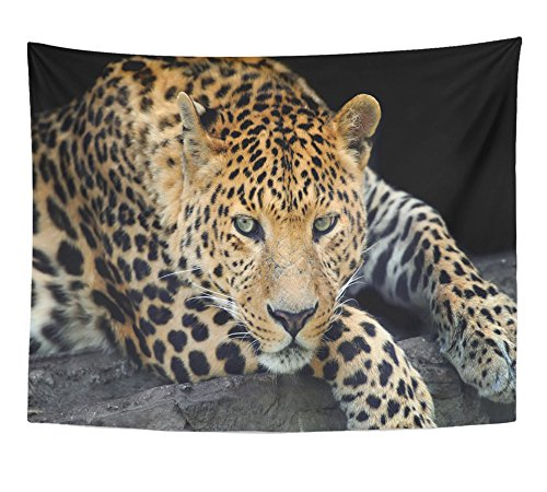 Emvency Tapestry Black Africa Close Up Wild Leopard on the Dark Yellow African Angry Animal Big Home Decor Wall Hanging 60'' x 80'' Inches Print For Living Room Bedroom Dorm by Emvency