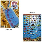 Franko Maps Egyptian Red Sea Fish ID for Scuba Divers and Snorkelers