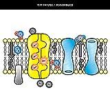 Speak Easies Cell Membrane Board Kit