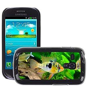 Super Stella Slim PC Hard Case Cover Skin Armor Shell Protection // M00146131 Butterfly Cichlid Barch Cichlid Fish // Samsung Galaxy S3 MINI i8190