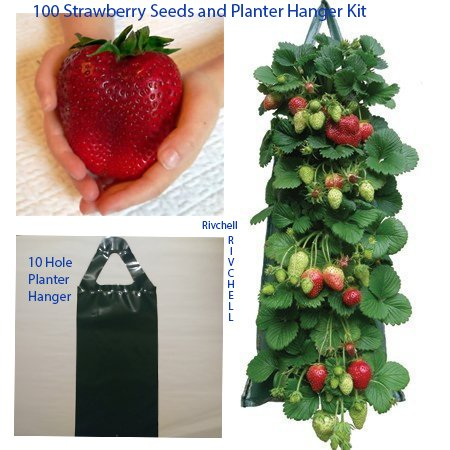 Large Juicy Red Strawberry Seeds WITH Hanging Planter Bag Pouch Kit -10 holes Kit Flower Fruit Vegetable Hanger Portable Fruits with High Antioxidants to Grow at Home