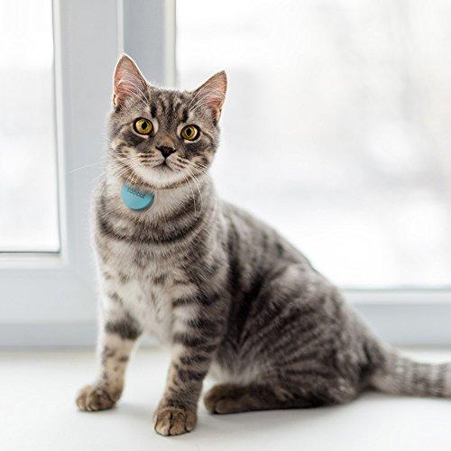 Tabcat Dispositivo localizador para gatos, perros, llaves y teléfono móvil: Amazon.es: Productos para mascotas