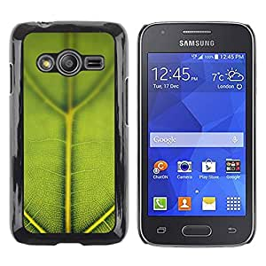 Shell-Star Arte & diseño plástico duro Fundas Cover Cubre Hard Case Cover para Samsung Galaxy Ace4 / Galaxy Ace 4 LTE / SM-G313F ( Green Leaf Macro Nature )