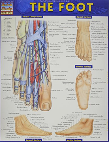 The Foot (Quick Study Academic)