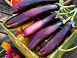 buy Heirloom Organic 600 Seeds Purple Long Eggplant Seed Rare Asian Eggplant Vegetable Fruit Garden Seeds F107 now, new 2018-2017 bestseller, review and Photo, best price $2.45