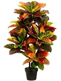 Harit - The Plants Shop Special Plant Croton (Green)