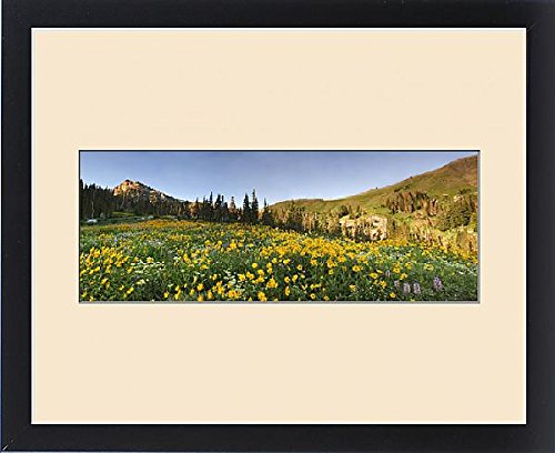 Framed Print of Panoramic Field of Wildflowers, Arnica SP, Urticifolia Horse Mint, Cow Parsnip by Fine Art Storehouse