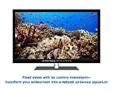 Anemonefish: Nature's Aquarium DVD [nature video for relaxation, ambience, and education]