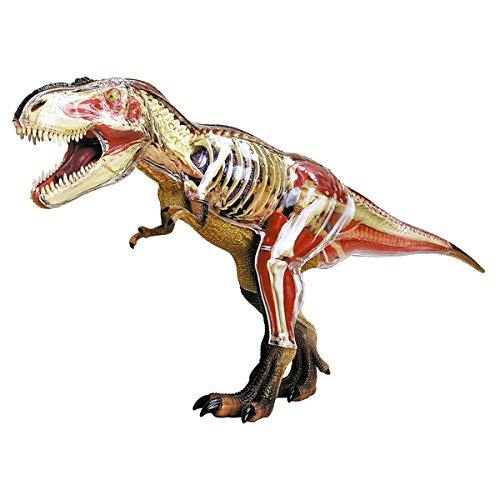 John N. Hansen Co. 4D T-Rex Anatomy Model (Greyhound Bus Model compare prices)