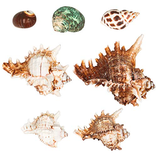These Natural Sea Shells Are Great for Decorating!