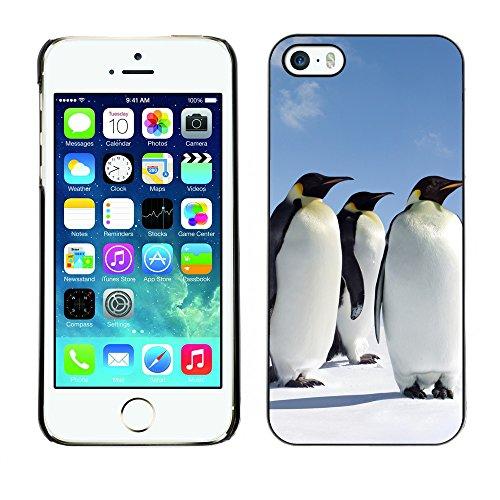 Hülle Case Schutzhülle Cover Premium Case // V00002644 Penguins // Apple iPhone 5 5S 5G