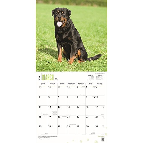 Rottweilers 2018 Wall Calendar Photo #2