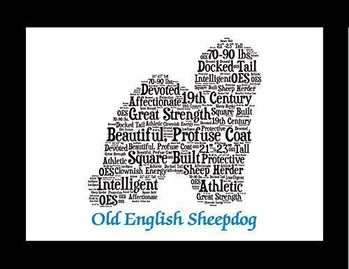 Old English Sheepdog Dog Wall Art Print - Personalized Pet Name - Gift for Her or Him - 11x14 matted - Ships 1 Day