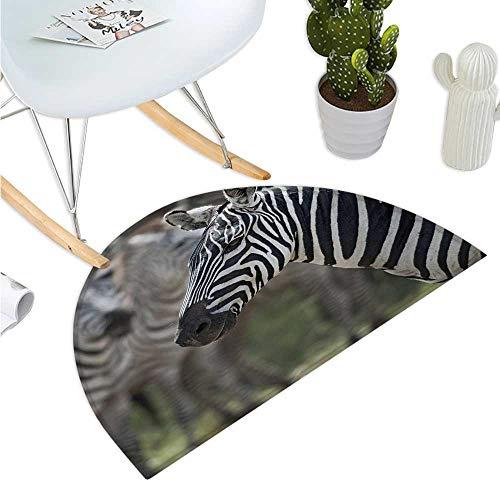 African Semicircular Cushion Zebra in Serengati National Park Safari Animal in Desert Picture Halfmoon doormats H 47.2