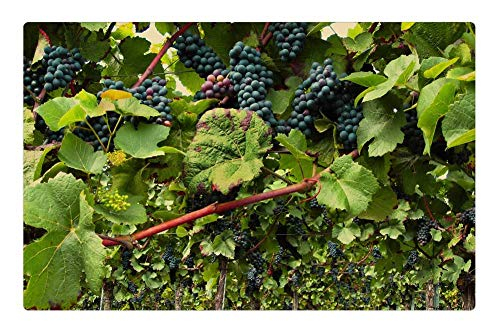 Tree26 Indoor Floor Rug/Mat (23.6 x 15.7 Inch) - Vines Pinot Noir Grapevine Wine Grapes Vineyard ()