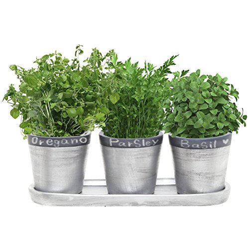 4.7 Inch Ceramic Planter Pots with Chalkboard Rim and Drain Tray, Set of 3, Silver - (Ceramic Garden Urns)