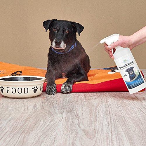 produit nettoyant et eliminateur d 39 odeur bio pour chiens ecosharkz animal spray d sodorisant. Black Bedroom Furniture Sets. Home Design Ideas