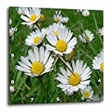 3dRose dpp_3136_3 Daisy Wall Clock, 15 by 15-Inch Review