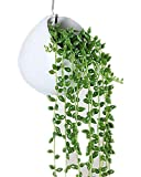 White Ceramics Wall Mounted Planters, Succulent Plants Pot Cactus Plants Pot Hanging or freestanding vase Planter with S-Type Hook