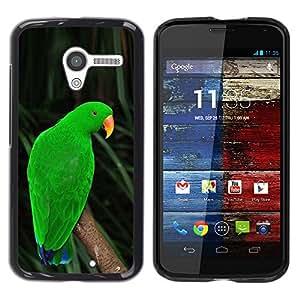 Loro Inmigrante cubano o haitiano Verde Naturaleza trópicos- Metal de aluminio y de plástico duro Caja del teléfono - Negro - Motorola Moto X 1 1st GEN I