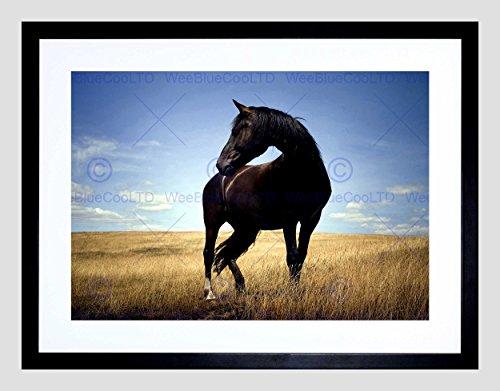 Black Horse Stallion Field Black Frame Framed Art Print Picture Mount B12x8291