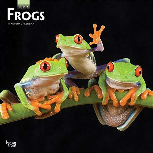 Frogs 2019 Wall Calendar - Calendar Frog