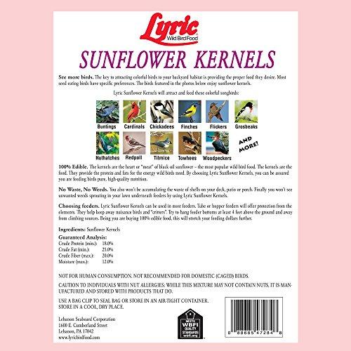 Lebanon lyric sunflower kernels, 25 lbs