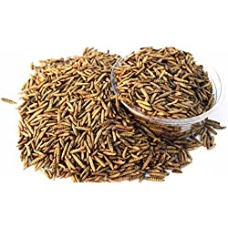 Golden Grubs 2lbs Dried Black Soldier Fly Larvae Tasty Balanced Diet