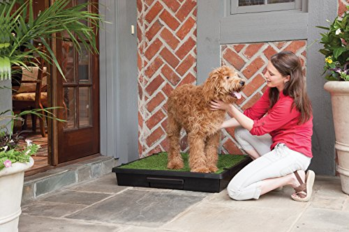 PetSafe Pet Loo Portable Dog Potty, Alternative to Pee Pads, Large